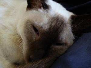 Lily, the studio cat (when she feels like it)